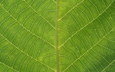 Nature Leaves Background Twenty-nine | Texture and Background