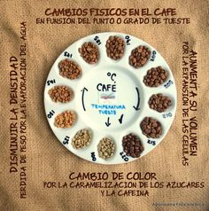 Showing the various types of coffee beans. I was anaware of the amount of colour variation. Call me ignorant, (I am not a coffee drinker!) but I though there were only brown and dark brown coffee beans :) Coffee Type, Coffee Art, Hot Coffee, Coffee Drinks, Coffee Shop, Latte Art, Tostadas, Types Of Coffee Beans, Coffee World