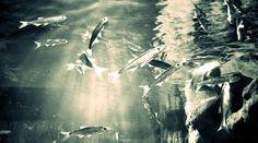 Víz alatt / Underwater - Photo: Beata Bauer