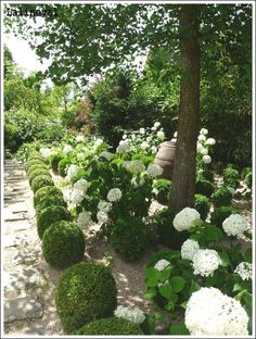 greige: interior design ideas and inspiration for the transitional home : Round boxwood hedges in the garden