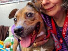 TO BE DESTROYED 10/04/14 - Manhattan Center   HAZEL - A1015185  *** EXPERIENCED HOME, NO SMALL CHILDREN ***  FEMALE, BLACK / TAN, PIT BULL MIX, 3 yrs STRAY - STRAY WAIT, NO HOLD Reason STRAY  Intake condition UNSPECIFIE Intake Date 09/24/2014, From NY 10472, DueOut Date 09/27/2014,