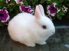 In the event you are searching for a pet that is not only extremely cute, but simple to keep, then look no further than a family pet bunny. Rabbit Life, Pet Rabbit, Super Cute Animals, Cute Little Animals, Cute Baby Bunnies, Cute Babies, Cute Hamsters, Cute Cats, Cute Bunny Pictures