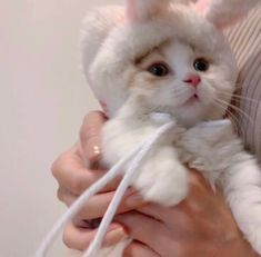 Cute Baby Cats, Cute Little Animals, Cute Funny Animals, Kittens Cutest, Cats And Kittens, Cute Little Kittens, Small Animals, Cat Icon, Cat Aesthetic