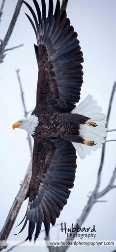"""Spread Eagle 