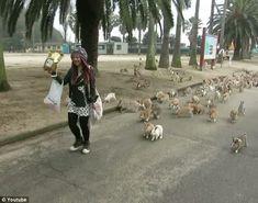 okunoshima rabbits | The island where the rabbits live is called Okunoshima, and was used ...