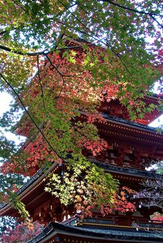 Looking up, fall in there  - Nara Prefecture, Japan by shinichiro