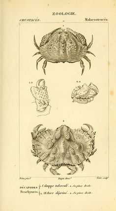 n504_w1150 | by BioDivLibrary