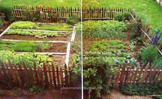 Picket fence veggie garden, can't wait till i can talk my husband into this project Picket Fence Garden, Garden Fencing, Garden Beds, Garden Landscaping, Small Gardens, Outdoor Gardens, Love Garden, Dream Garden, Garden Landscape Design