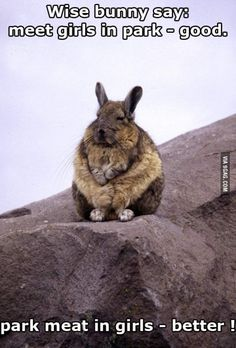 9GAG - Wise words from wise bunny