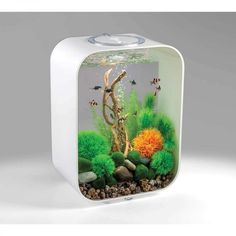 Home Aquarium, Aquarium Design, Reef Aquarium, Aquarium Fish Tank, Planted Aquarium, Aquarium Ideas, Biorb Fish Tank, Betta Fish Tank, Small Fish Tanks