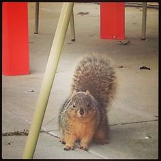 Warner College says Happy Squirrel Appreciation Day! This little guy will be waiting for your lunch crumbs on campus.