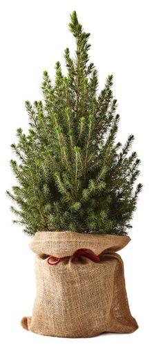 Reusable Tote Bags, Plants, Flora, Plant, Planting