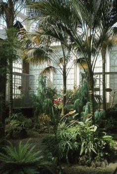 Amazing Indoor Jungle Decorations Tips and Ideas 3 - Winter Garden Design Jardin, Garden Design, House Design, Loft Design, Design Design, Jungle Decorations, Gazebos, Tropical Garden, Tropical Plants