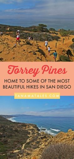 Things to do in San Diego, #California, #USA – Travel tips and tricks - The Torrey Pine is the rarest pine species in the United States and a reserve in San Diego County is one of the only two places where you can hike around them. This guide shows you what hikes and trails you should do at the Torrey Pines State Natural Reserve. In addition, this is an excellent place for beach, golf, photography and paragliding! #SanDiego #LaJolla