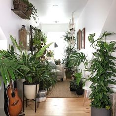 Every space needs a Monstera...or two! : @planterina thanks for sharing with #houseplantclub #Regram via @houseplantclub
