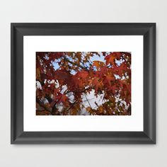 Fall Leaves by Sarah Shanely Photography $31.00