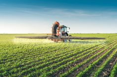 The longest ever study of GMO crops has found that the use of GMO seeds on farms…