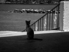BW Photos 2013 - Vassilis Michalopoulos