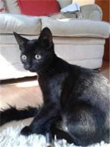Black Cat Lindy Was Found As A Stray With Young Kittens That Sadly All Died She S Looking For A Home With Lots Of Tlc Cat Adoption Cats Kittens