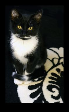 Kitty ~ Black and White