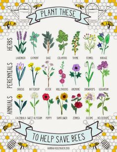 Bee friendly plants, Hannah Rosengren on 'growourown.blogspot.com' ~an allotment blog