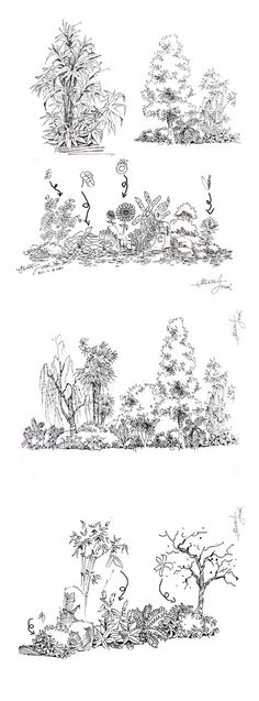 Plant Sketches, Tree Sketches, Nature Sketch, Nature Drawing, Garden Drawing, Plant Drawing, Landscape Sketch, Landscape Drawings, Pencil Plant