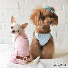 WOOFLINK - Hip & Cool designer dog clothes, pet bed, pet carrier and much more! Long Haired Chihuahua, Designer Dog Clothes, Chihuahua Love, Pet Carriers, Dog Design, I Love Dogs, All In One, Pup, Dog Cat