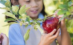 Fall is the perfect time for apple picking...and apple-eating. From old-fashioned standbys to new hybrids to East Coast favorites to bakers' staples, these are our favorite orchard-fresh varieties that you just have to try.