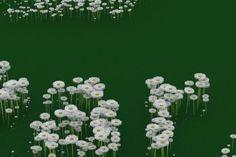 daisys art Marsoll