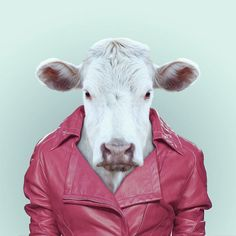 Animal Portrait Photography in the human clothes