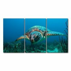 Chris Doherty 'Turtle' Canvas Art 3-piece Set | Overstock.com Shopping - The Best Deals on Canvas