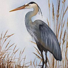 The beauty of a great blue heron on driftwood logs. A hymn to nature's delight. An orignal watercolor by artist James Williamson recreated as a fine art image by Fine Art America. Flying Bird Silhouette, Watercolor Paintings, Original Paintings, Thing 1, Blue Heron, Canvas Prints, Art Prints, Large Painting, Beauty Art