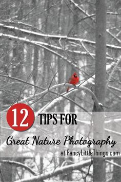 12 Tips for Great Nature Photography