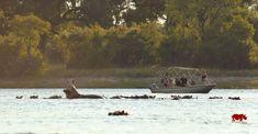 Sambia ist ein wunderschönes Reiseland & besonders geeignet für Safari-Reisen. Erfahren Sie mehr über die beste Reisezeit!