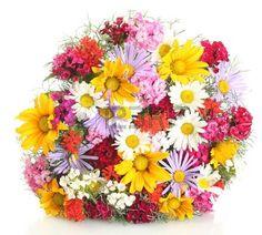 wildblumen: schönen Bouquet von hellen Wildblumen, isoliert auf weiß