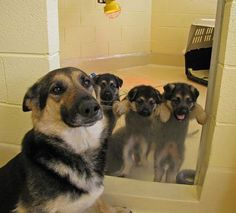 A canine mother is posing proudly in front of her three baby puppies... And she has every reason to be proud of them!