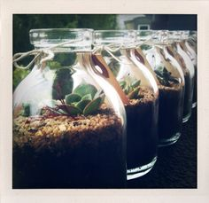 terrariums in non-traditional glass jars