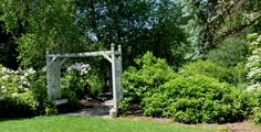 White arbor with rhododendron and hanging petunias