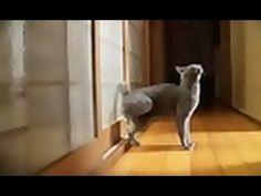 Cat Knocks On Door at Machine Gun Rate