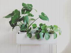ferm LIVING Plant Stands are available in two sizes and more