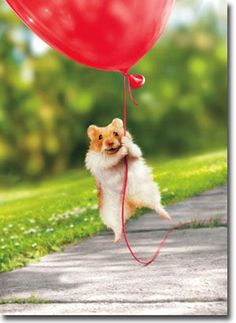 Details about Hamster Heart Balloon Avanti Valentine's Day Card by Avanti Press - Stuff that Miller likes - tierbabys Cute Little Animals, Cute Funny Animals, Funny Hamsters, Baby Hamster, Tier Fotos, Cute Animal Pictures, Animal Memes, Guinea Pigs, Animals Beautiful
