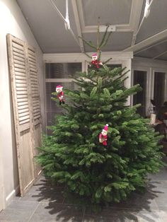Cleaning Service, Advent, Christmas Wreaths, Holiday Decor, Plants, Home Decor, Decoration Home, Room Decor, Plant