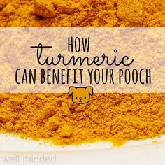 how turmeric can benefit your pooch — well minded pets