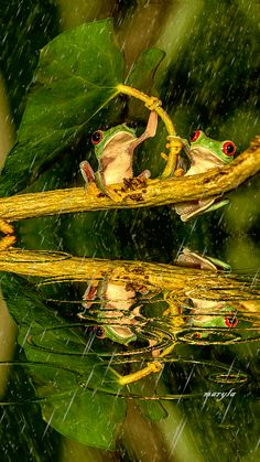 Free animated frogs in the rain mobile wallpaper by maryla75 on Tehkseven
