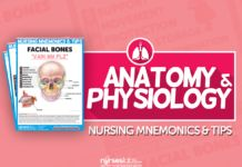 Anatomy and Physiology Nursing Mnemonics & Tips