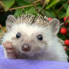 Princess Pricklepants says hi.