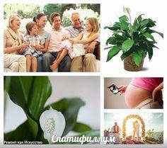 10 РАСТЕНИЙ СЧАСТЬЯ, КОТОРЫЕ ДОЛЖНЫ БЫТЬ В КАЖДОМ ДОМЕ  Еще наши предки считали, что каждое растение наделено великой силой, которая способна повлиять на ход событий жизни человека. Сегодня мы расскажем о 10 растениях счастья, которые способны украсить Вашу жизнь яркими и приятными моментами.  1. Спатифиллум В народе этот цветок известен как «женское счастье». Спатифиллум достаточно неприхотливое в уходе растение. Опрыскивайте его ежедневно водой, и каждой весной пересаживайте в свежую…