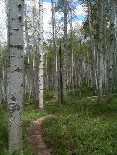 My favorite trail in Beaver Creek, CO.