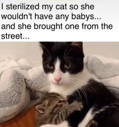 Really Funny Memes, Stupid Funny Memes, Funny Relatable Memes, Haha Funny, Funny Cute, Funny Animal Memes, Cute Funny Animals, Cute Baby Animals, Cat Memes