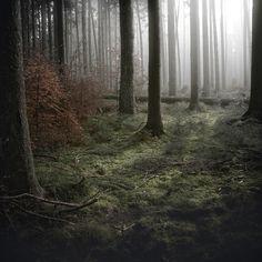 Part of the Wald photos from Jurgen Heckel.